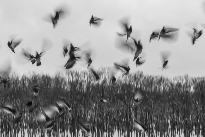 birds-801778_1280