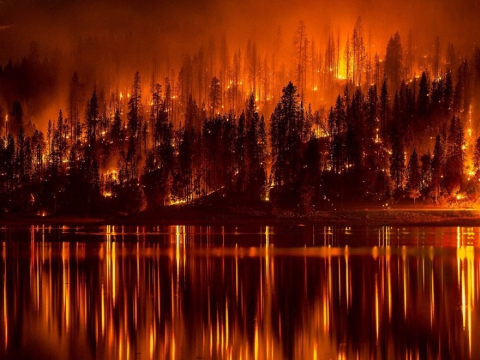 forest-fire-991479_960_720
