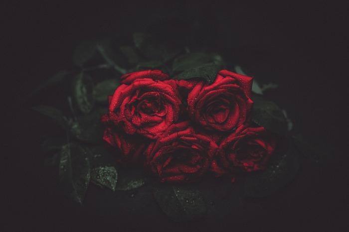 roses-1245869_960_720